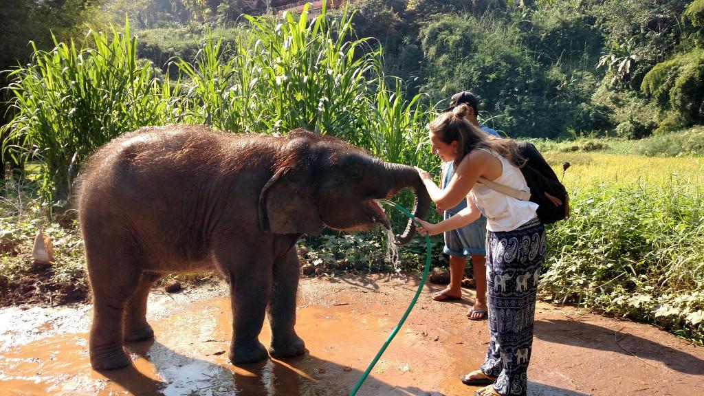 elefantes-tailandia-amanda-viaja