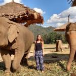 Como interagir com elefantes de maneira ética