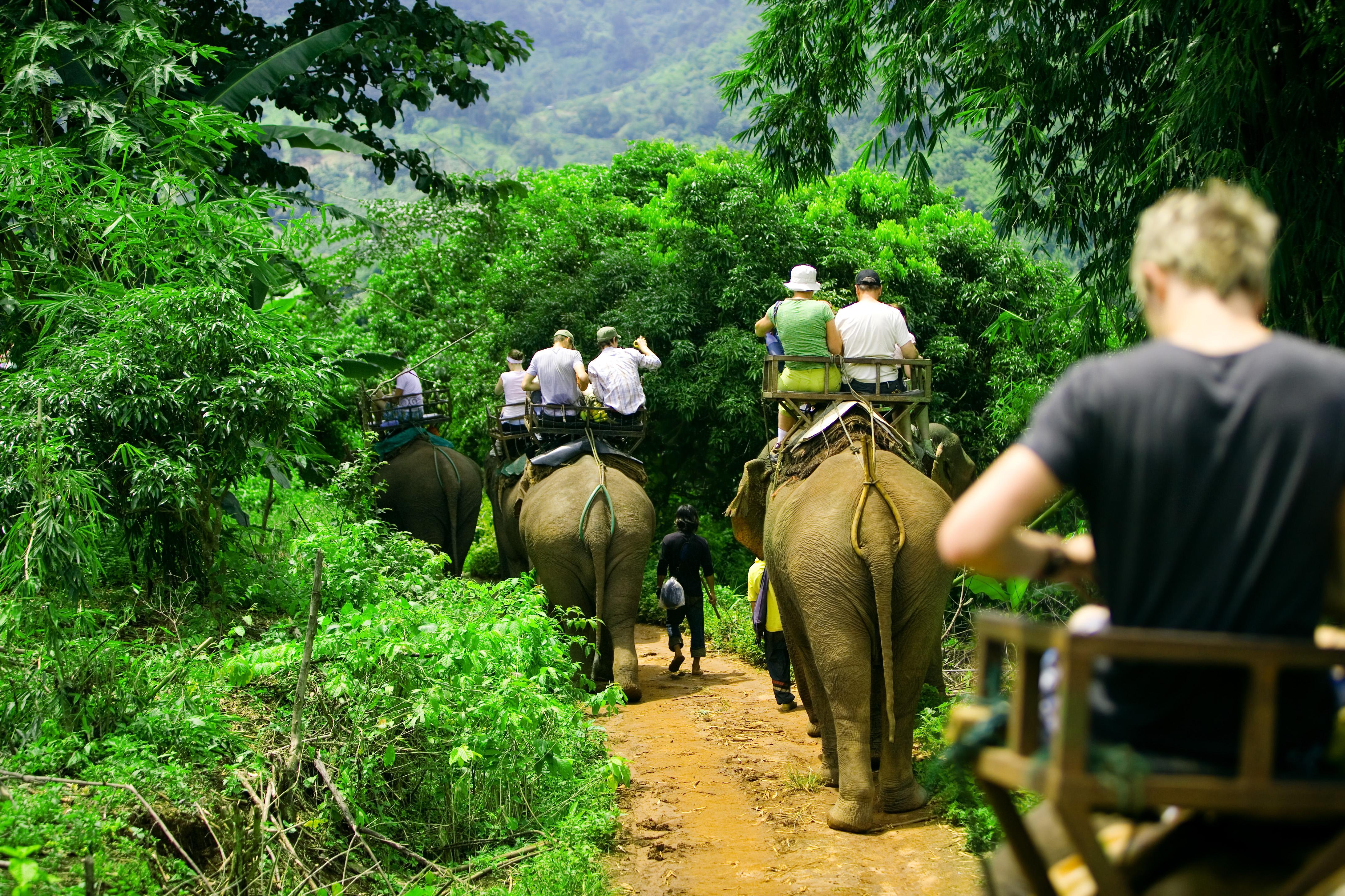 passeio de elefantes