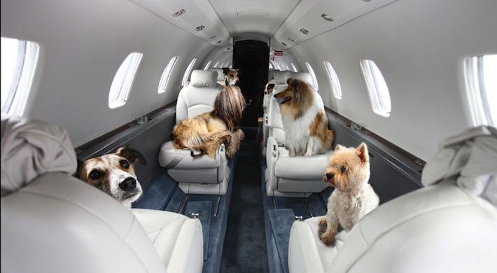 10 dicas para transportar seu cachorro ou gato no avião