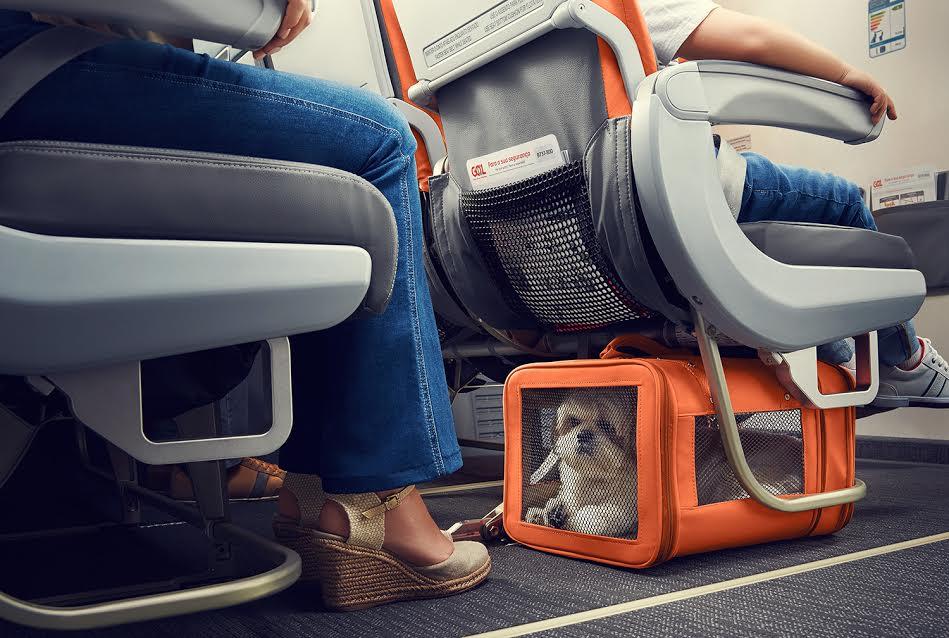 animais-voo-viagem
