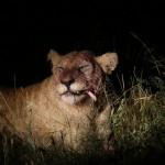 África do Sul: meu roteiro e uma sugestão de roteiro de 15 dias