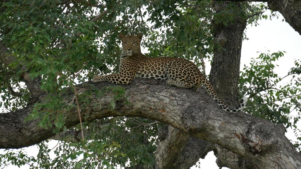 quanto custa safari amanda viaja