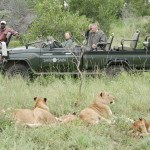 Guia completo sobre safári no Kruger Park, África do Sul