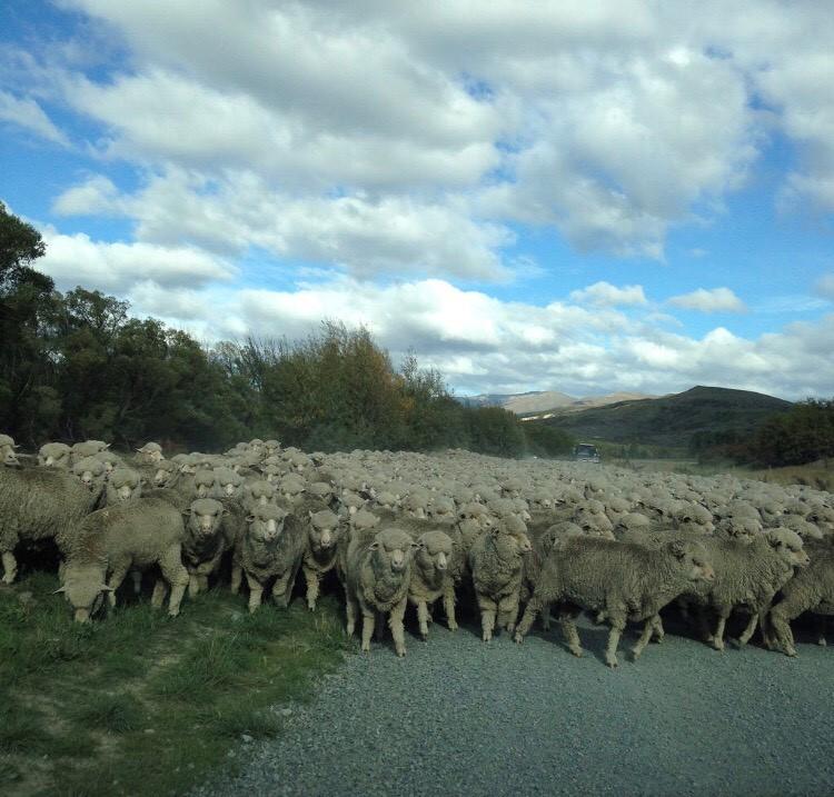 morar auckland nova zelandia