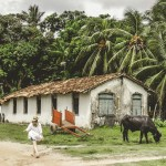 O que fazer na Ilha de Marajó no Pará