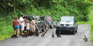 Cena comum pelas estradas