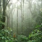 Quanto custa viajar para Costa Rica (e como economizar)