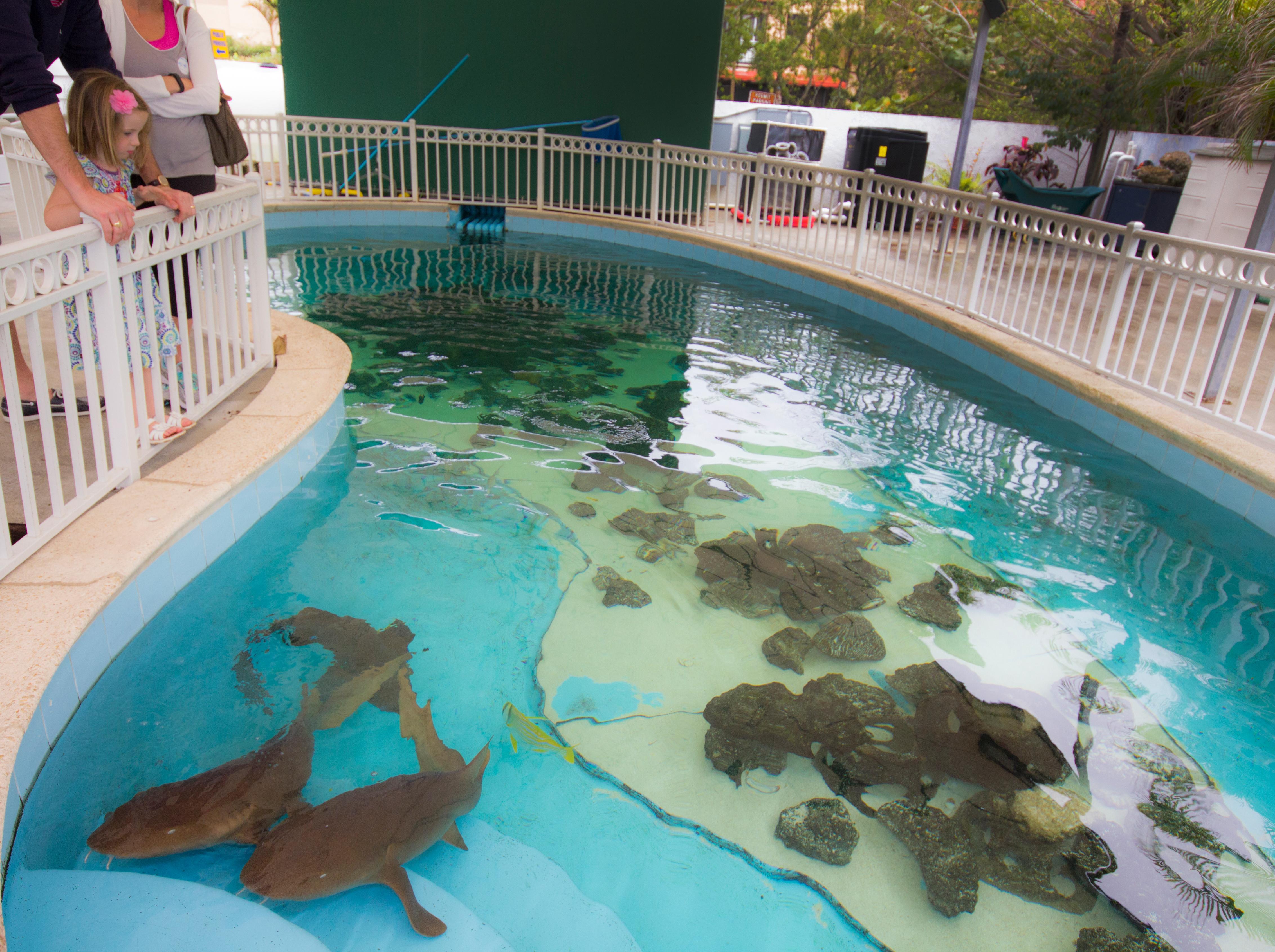 Lugares para visitar com crianças na Flórida