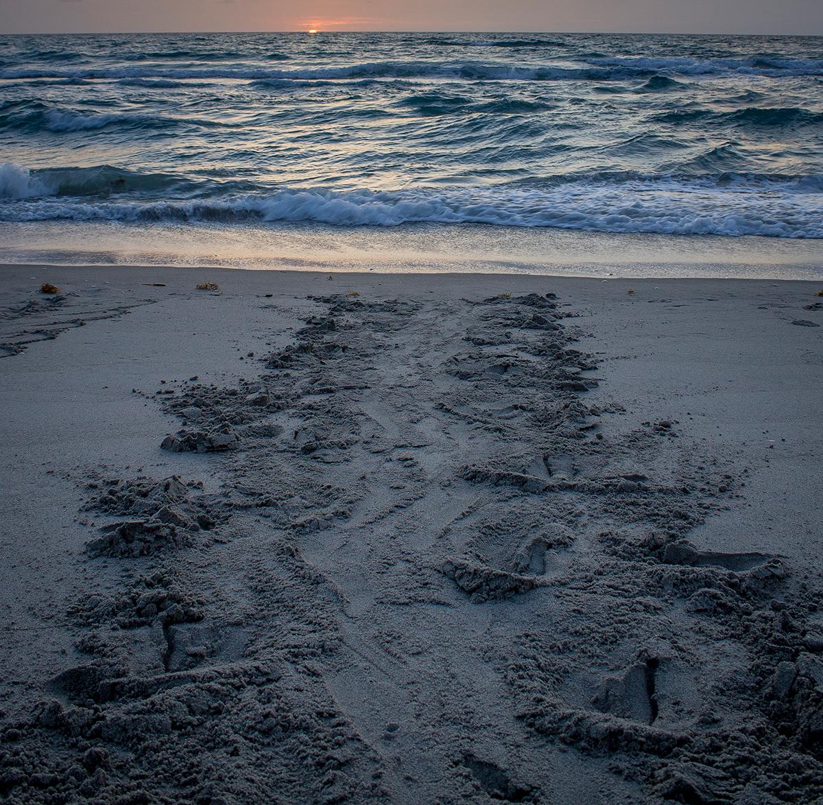 Praia com projetos tartaruga na Flórida