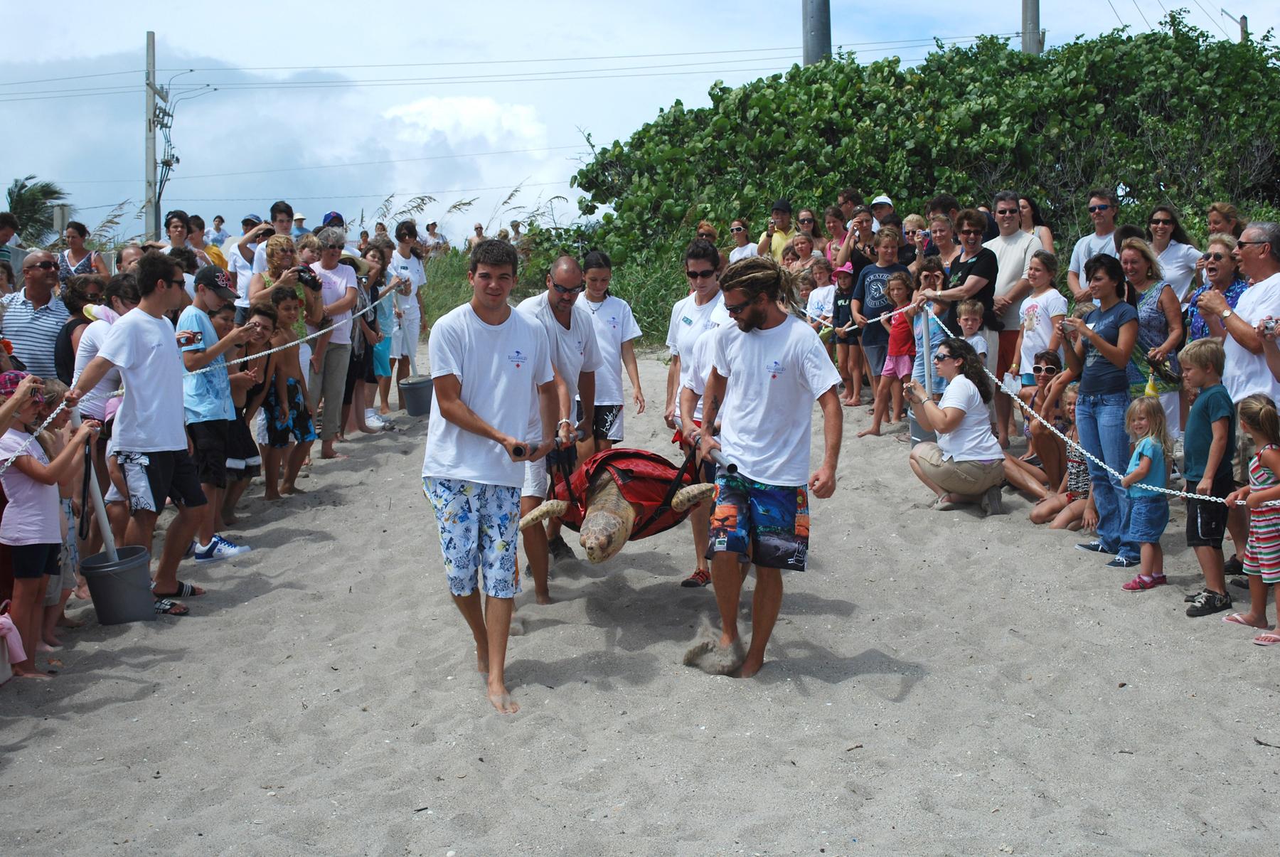 LCM um dos projetos tartaruga na Flórida