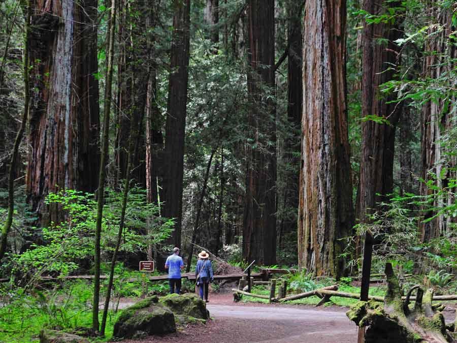 Parque Nacional Redwoods, um passeio na região de Sonoma